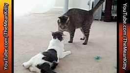Mean Kitty - Sparta The Pest