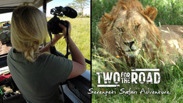 Our Incredible Day On Safari In The Legendary Serengeti