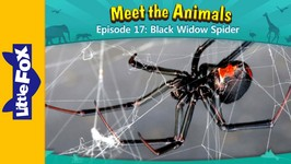 Meet the Animals 17 - Black Widow Spider - Animated Stories by Little Fox