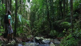 Relax Unwind and Explore the Ancient Rainforest's of Queensland Australia