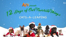 AFV's 12 Days Of Christmas - Amazing Leaping Cats Compilation