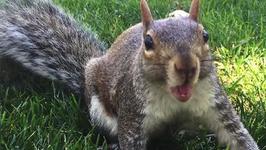 Drunk Squirrel Ransacks UK Pub