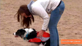 Researchers Find Dogs Chase Away Beach Pollution