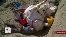 Paleontologists Unearth Massive T-Rex Skull