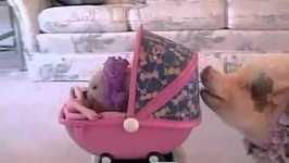 Baby Pig Gets a Push- PetTube