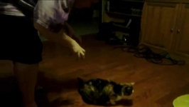 Man Scares Tortoiseshell Cat and Cat Jumps Ridiculously High