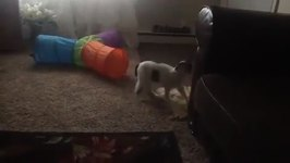 Cat Leaps Backwards When Another Cat Jumps Out At It