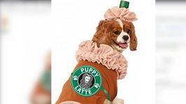 Funniest Pet Halloween Costumes