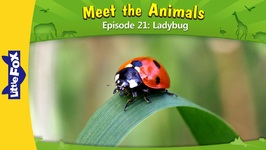 Meet the Animals 21 - Ladybug - Level 2