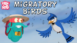Migratory Birds - The Dr. Binocs Show - Learn Videos For Kids
