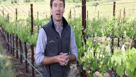 Spring Seasons of the Vineyard Teaser 3: Budbreak