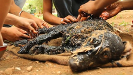 Rescuers Free Animal after it Slipped into Hot Tar