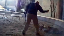 Life of Pi Animal Trainer Caught on Video Beating Tiger With Whip