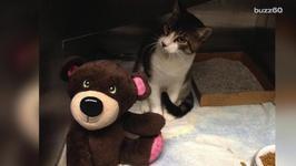 Homeless Woman Saves Homeless Cat