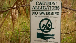 Disney Killer Alligator Found and Killed