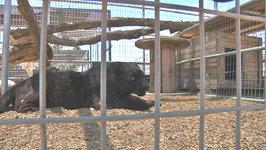 Pet World Insider TV Forever Wild Exotic Animal Sanctuary Teaser