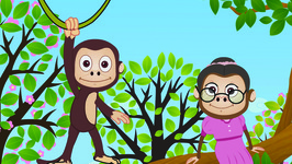 Baby Monkey Song