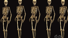 Which Is The Smallest Bone In Our Body?