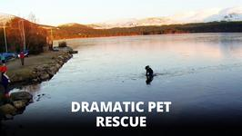 Dramatic Drone Footage: Dog Rescued From Frozen Lake