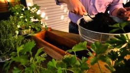 A Perfect Herb Window Box