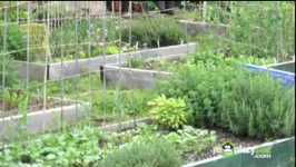 Choosing What To Plant In Your Vegetable Garden