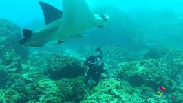 Diving With Manta Rays - Julian Rocks Byron Bay NSW