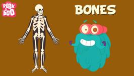 Bones - The Dr. Binocs Show