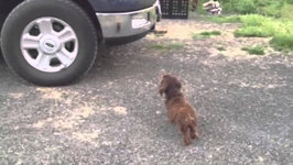 Dog Protects Family From His Reflection