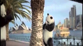 Bizarre Chinese Panda Ad Reminds Tourists How to Behave Down Under