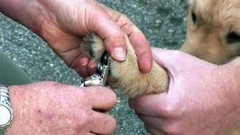 How To Learn Trimming A Dog's Nails