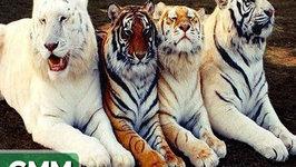 Bizarre Animal Hybrids