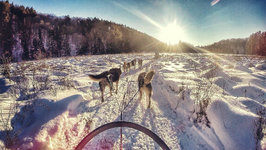 Dogsledding In Haliburton, Ontario With Winterdance Dogsled Tours