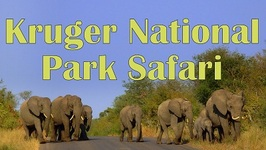 Kruger National Park Animal Safari In South Africa
