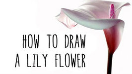how to draw a lily flower drawing fl