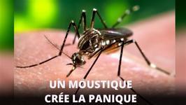 Un moustique menace les femmes enceintes