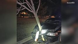 Drunk Woman Drives With A Tree In Her Car