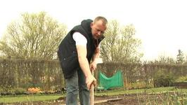 How To Learn Planting Parsnips