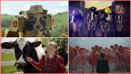 Most Funniest Cows at Milk and Butter TV Commercials Ever