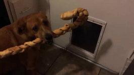 Dog Big Stick Small Door Compilation