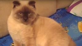 Siberian City Backs Cat For Mayor