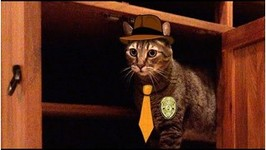 Detective Kitty In The Case Of The Moved Cabinet