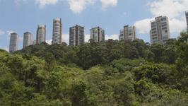 Sao Paulo to Devour Last Spring for Car Park