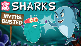Sharks  Myths Busted - The Dr. Binocs Show - Educational Videos For Kids