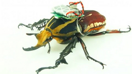 Cyborg Beetles and Insect AI Have Arrived