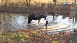 Adorable Horse Is Having a Splash