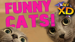 The Funny Cat Video Hall Of Fame - AFV XD