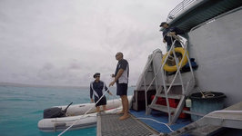 Lady Musgrave Island - Queensland Diving