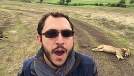 The lowdown on a Ngorongoro Crater safari PLUS a very friendly lion - vlog 22