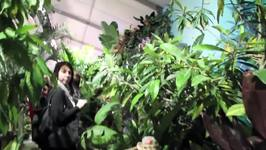 New York City: Macy's Flower Show