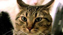 Mean Kitty - Still Here